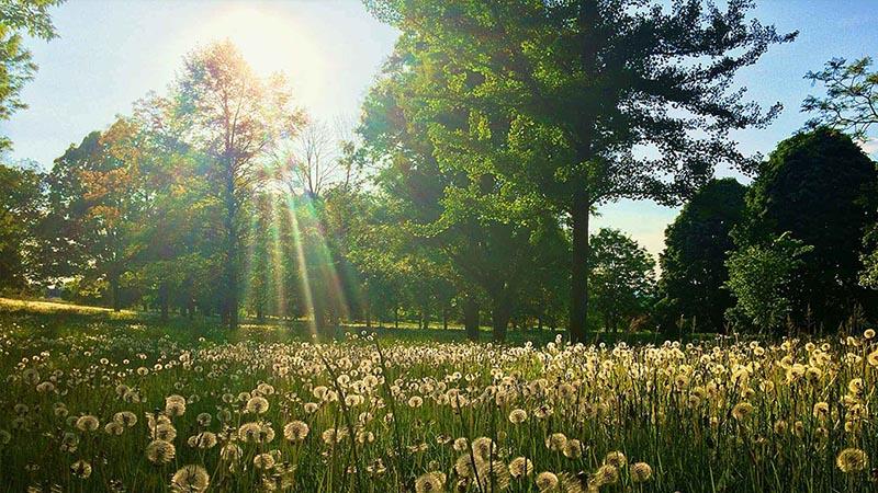 Secrest Arboretum, Wooster Ohio